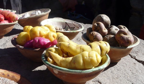 A few of the over 4,000 varieties of potatoes found in the Andes.