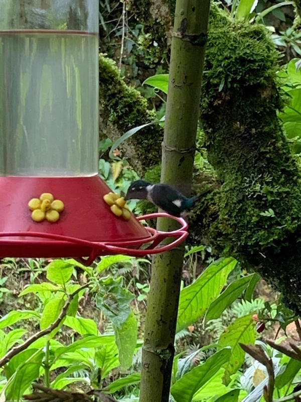 Elizabeth Harrold - Peruvian Amazon Blog - Hummingbird Feeder.jpg