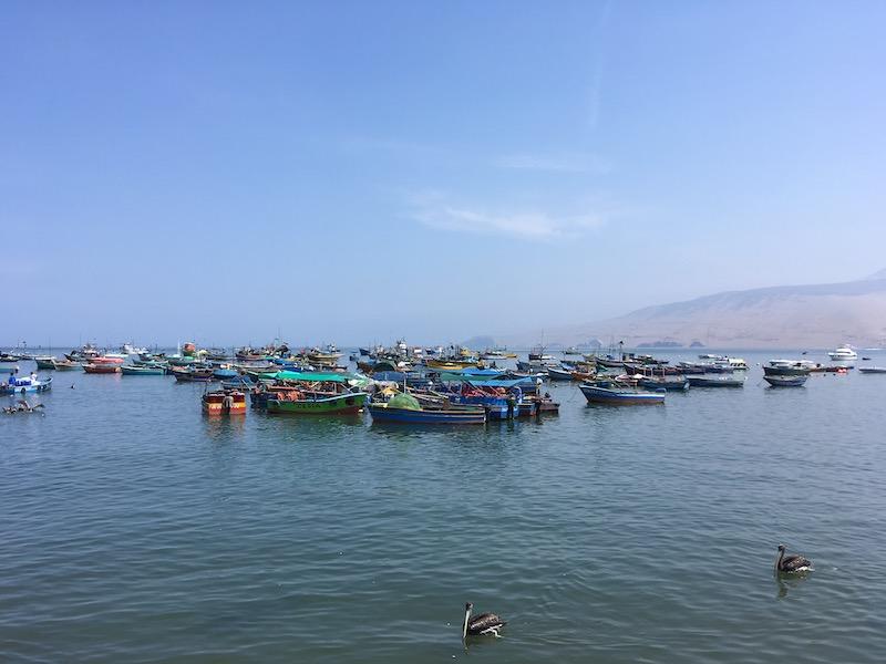 Eckett x 3 - Northern Peru trip - Lima Fishing Boats.jpeg