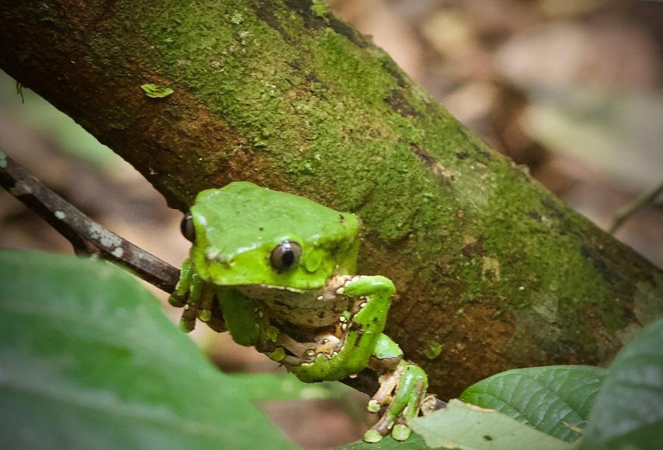 Walter x 2 Testimonial - Pacaya-Samiria Amazon Lodge - Green Frog.jpg