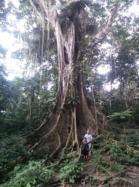 Walter x 2 Testimonial - Pacaya-Samiria Lodge - Ceiba Tree.jpg