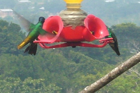 Waqinki Botanical Garden also attracts numerous hummingbirds.