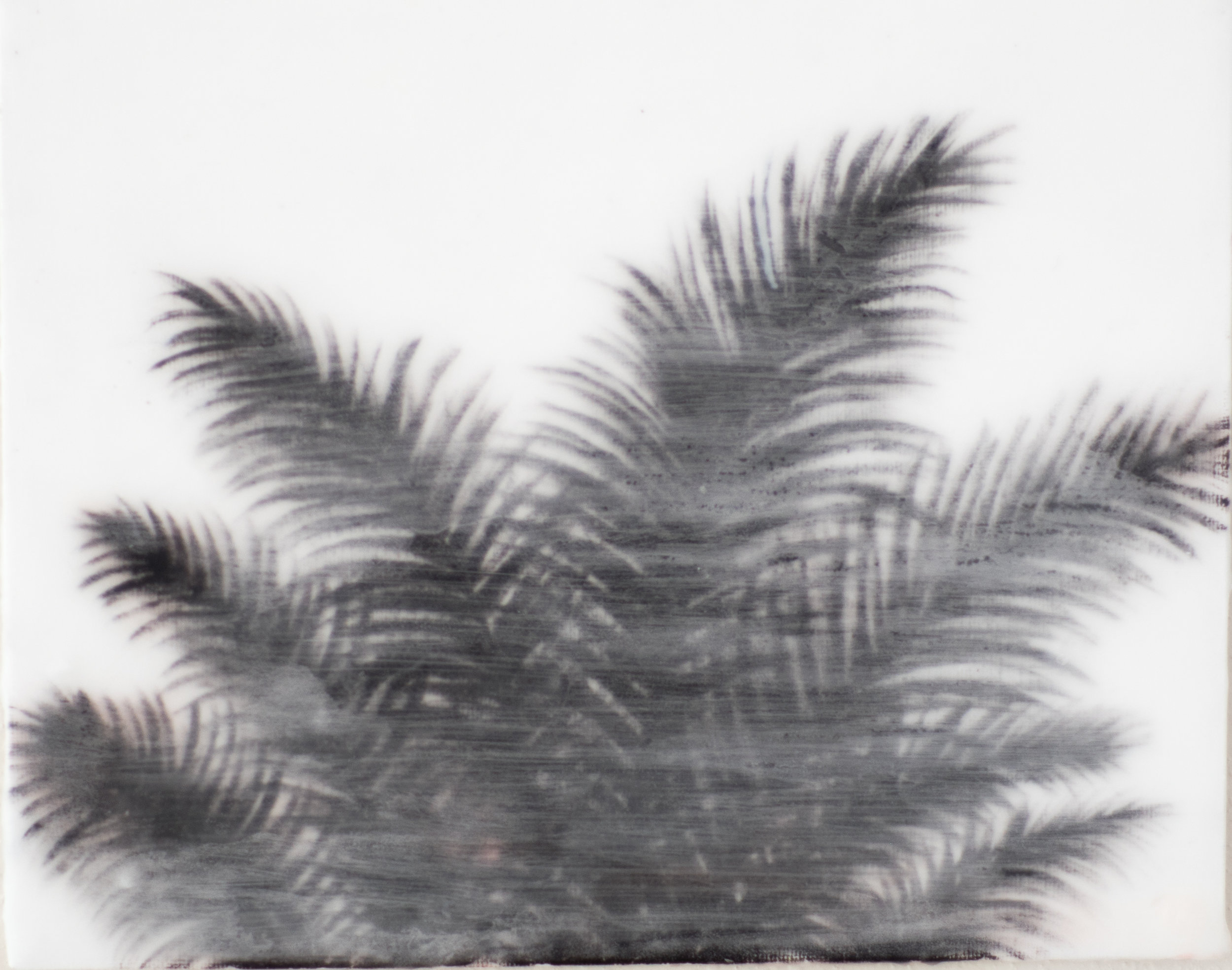 palmtree4.jpg
