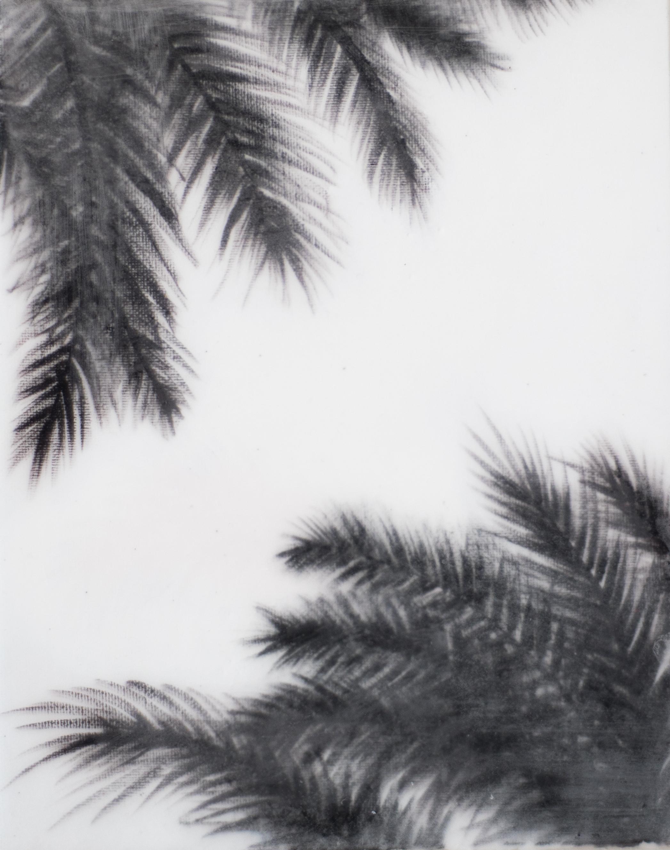 palmtree5.jpg