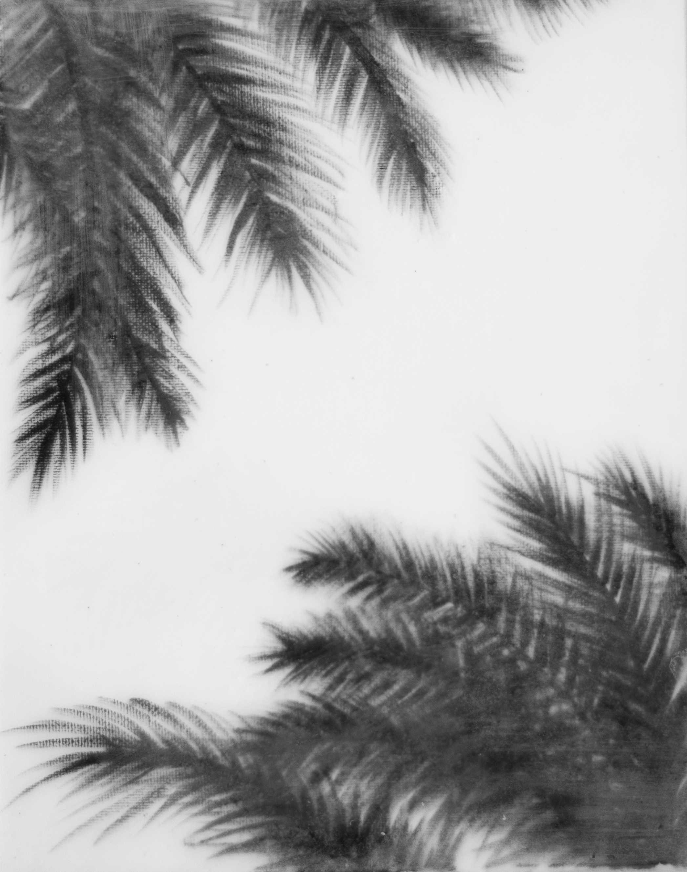 blackandwhitecornerpalm.jpg