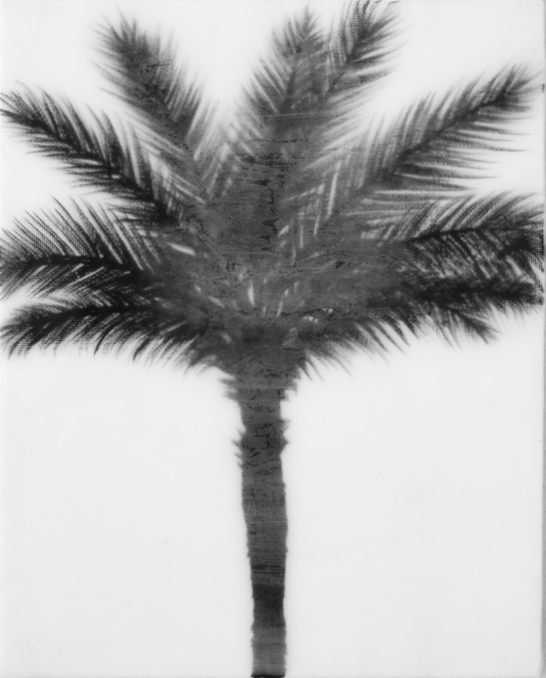 blackwhitesinglepalm.jpg