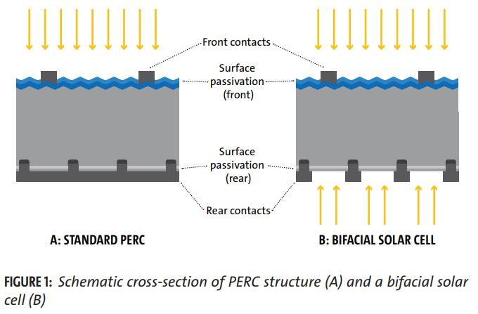 In case you're the visual type - here's a decent snippet from SolarWorld's white paper showing the basic difference between normal PERC and bifacial cells.