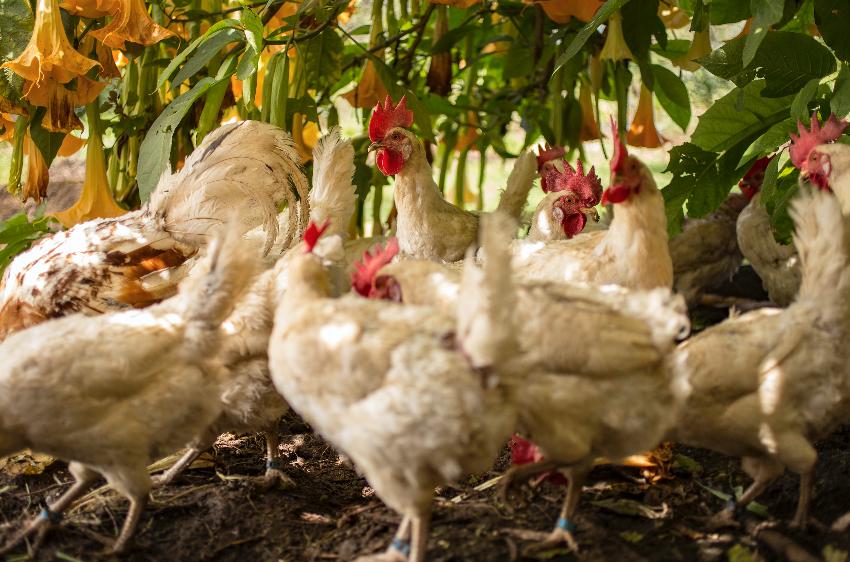 huerto orgánico rancho avandaro valle de bravo huevos.png