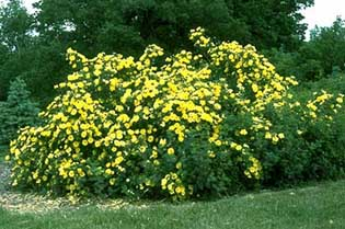 Yellow flowers are tokens of friendship, appreciation,and respect.