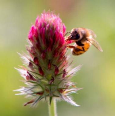 pollinator.png