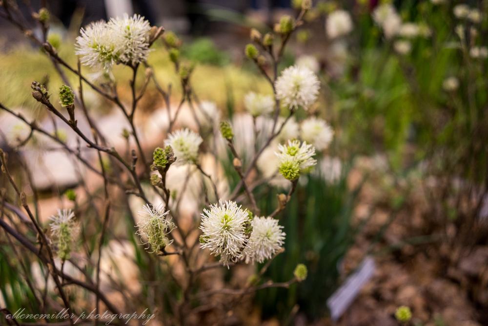 Phila Flower Show-29.jpg