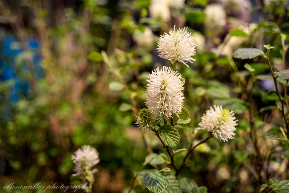 Phila Flower Show-35.jpg