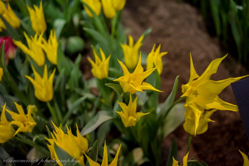 Phila Flower Show-47.jpg