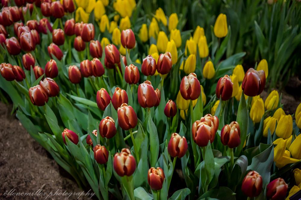Phila Flower Show-48.jpg