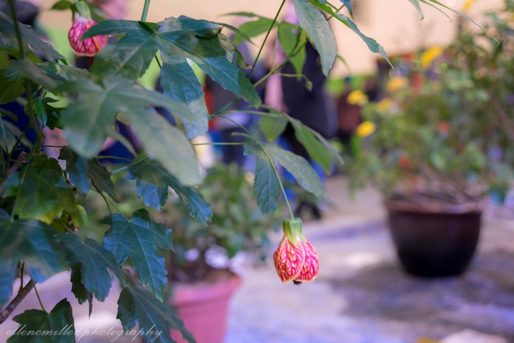 Phila Flower Show-96.jpg
