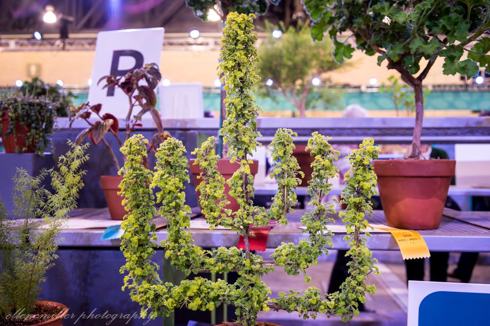 Phila Flower Show-104.jpg