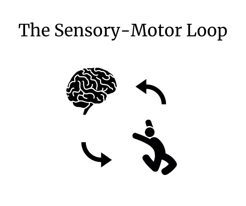 The Sensory-Motor Loop (1).png