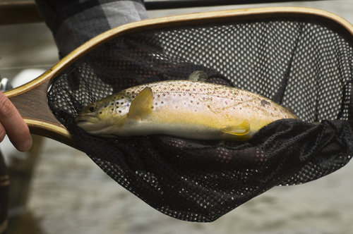 Do You Need A Fishing License? Colorado Fishing License Requirements