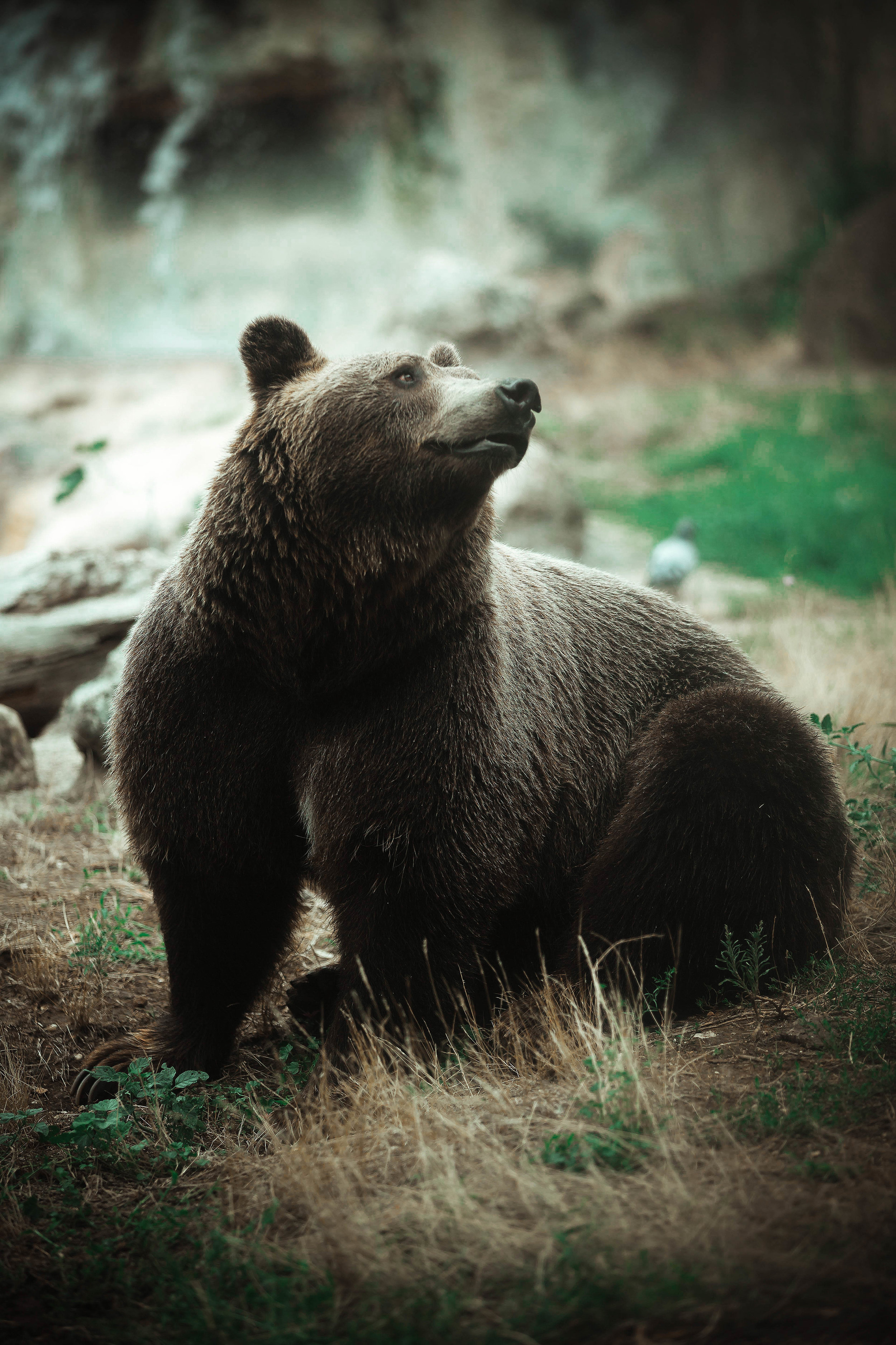 """""""Bear Proof"""" Estate Planning means planning for every eventuality with a well drafted estate plan from your attorney. The Law Office of Nathaniel Gilbert, LLC knows that unpredictable legal fees are a barrier to effective estate planning, and offers flat fee packages attractive to everyone."""
