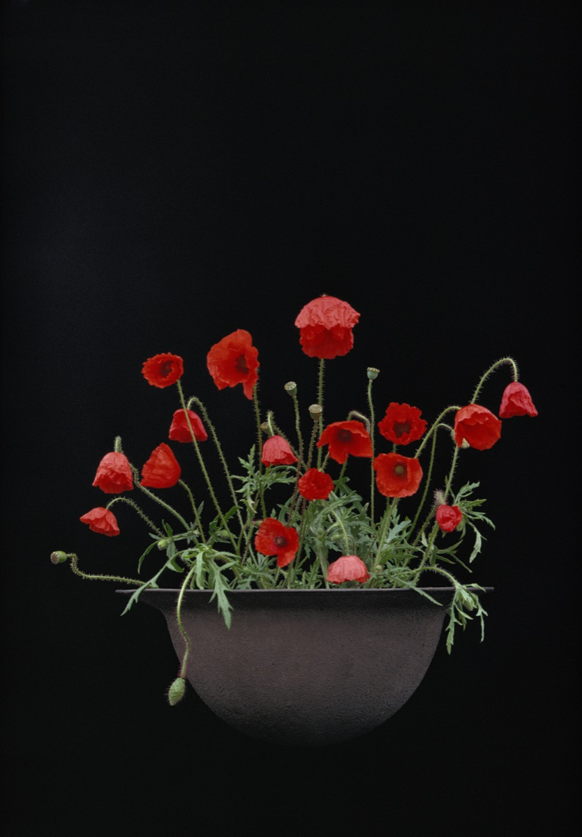 Poppies In Helmet