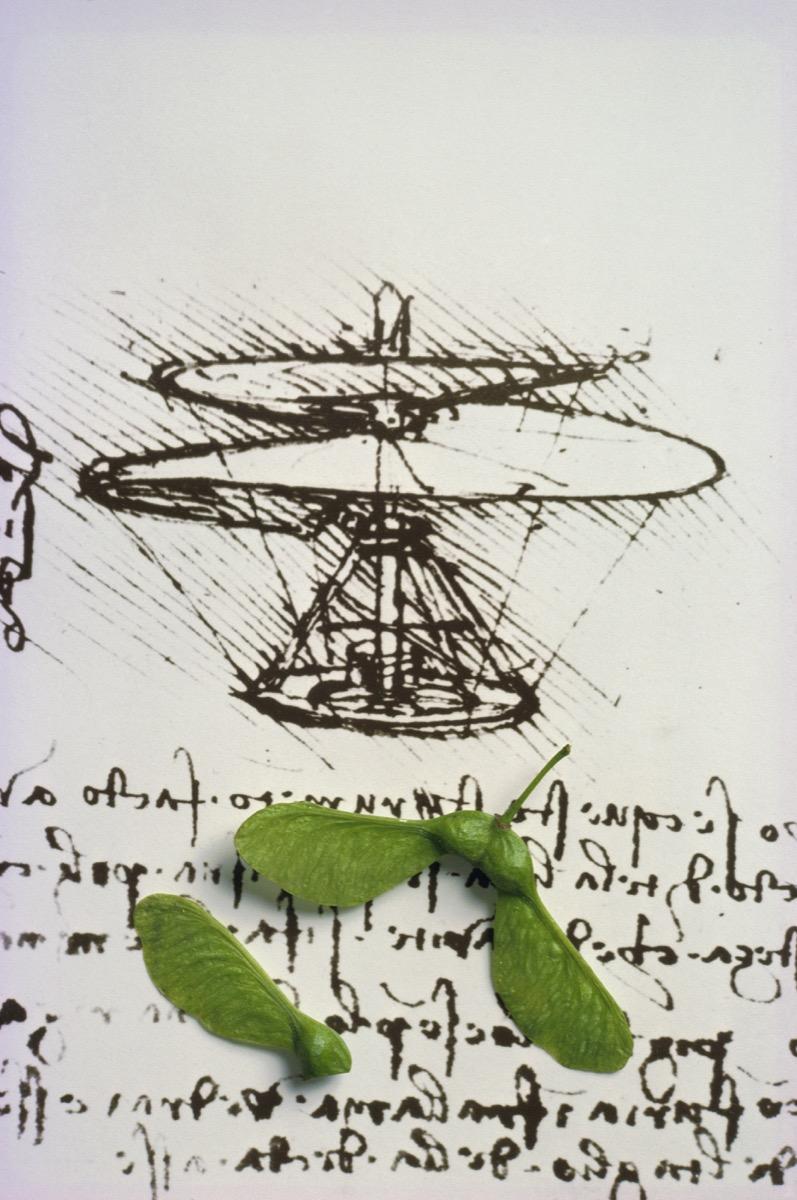 Leonardo da Vinci/Sycamore seeds