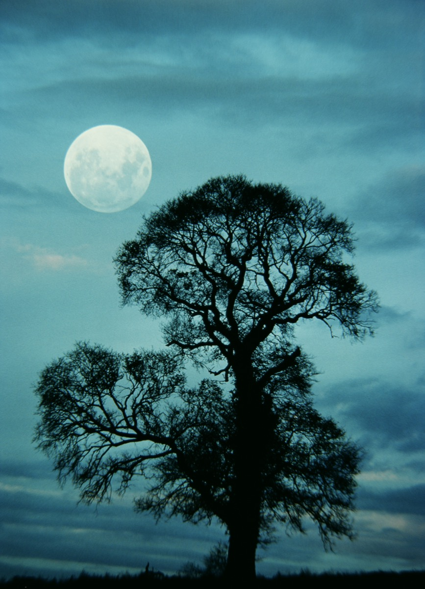 Moon and Elm