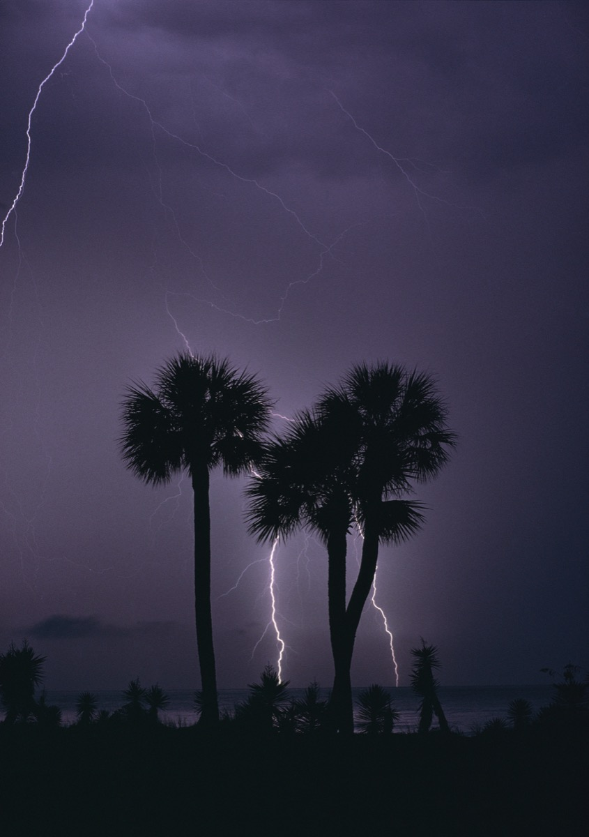 Palm Trees and Lightning