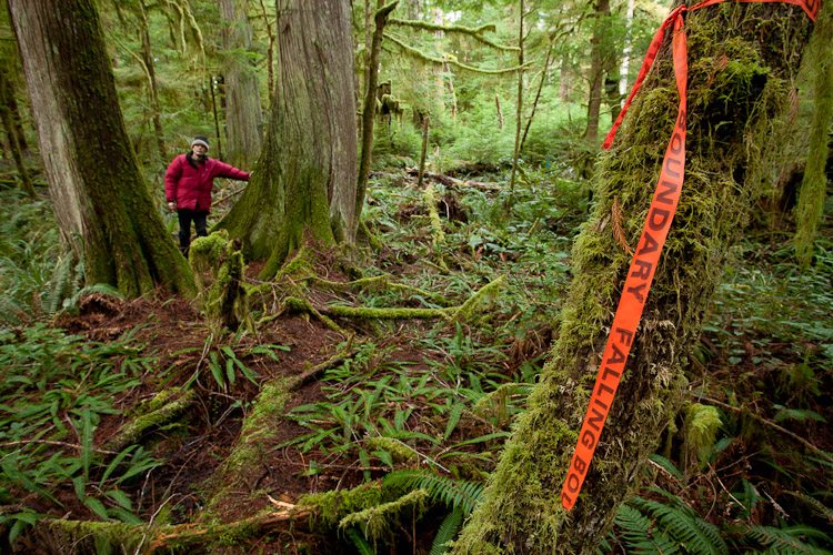 Cortes Island resident Oliver Kelhammer in the Basil Creek ancient forest, owned by Island Timberlands. Photo by TJ Watt.