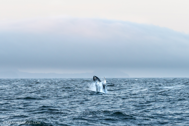 158-3_Photo By Marisa Marulli_Tongass National Forest_Alaska.jpg