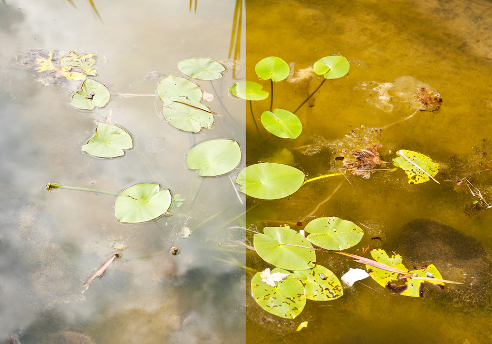 The image above demonstrates the effect of a polarizing filter. The left side shows the pond scene photographed without the use of any filters. The right side shows the same pond scene photographed while a polarizing filter is placed on the lens, reducing glare and allowing the detail underneath the water surface to come through.
