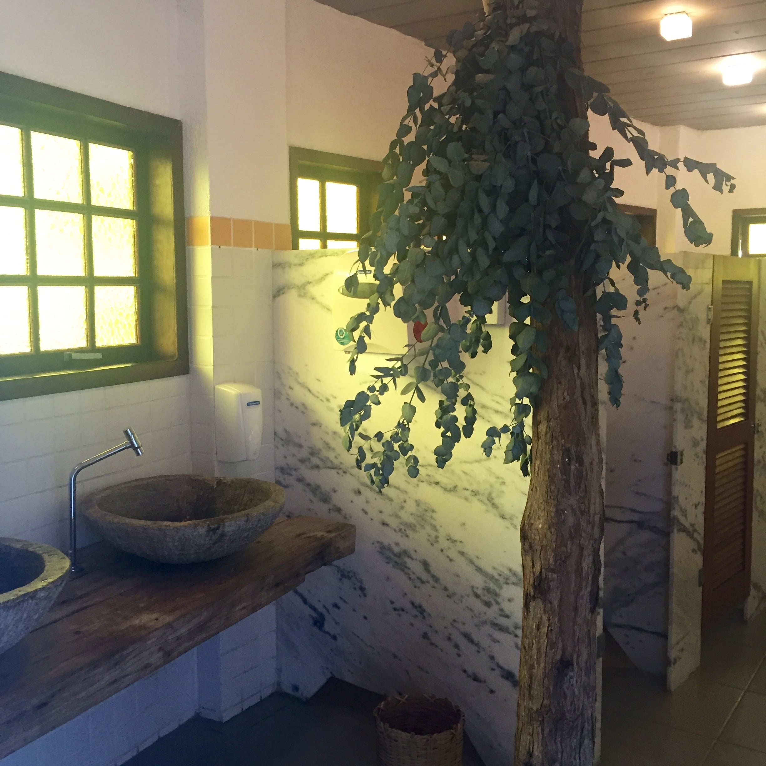 Even the bathroom had a tree growing  in it!