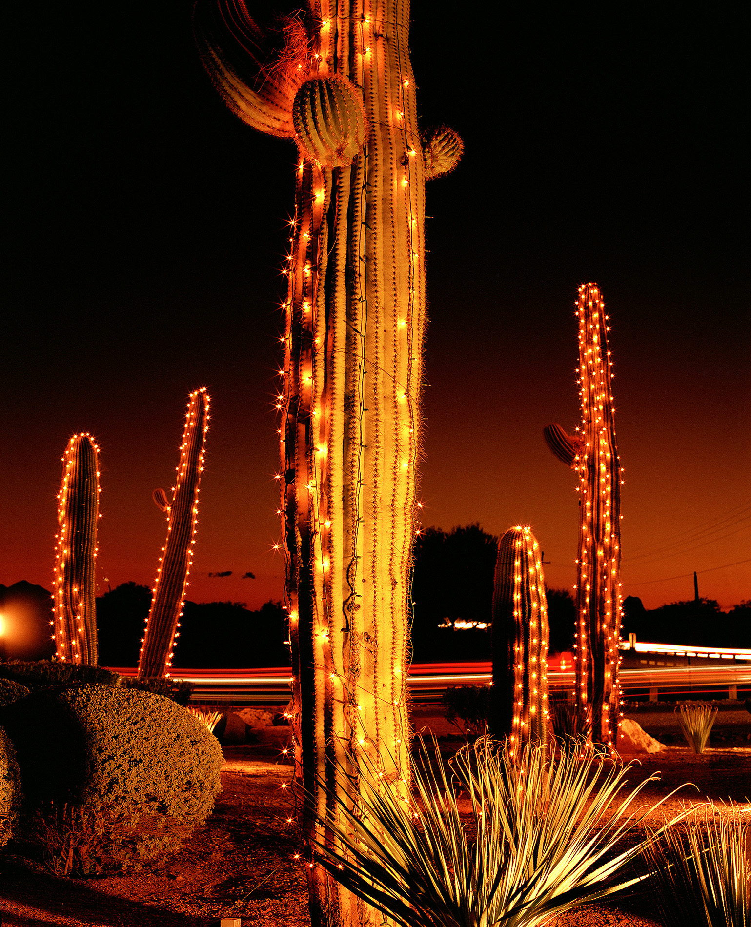 Saguaro Nights #2