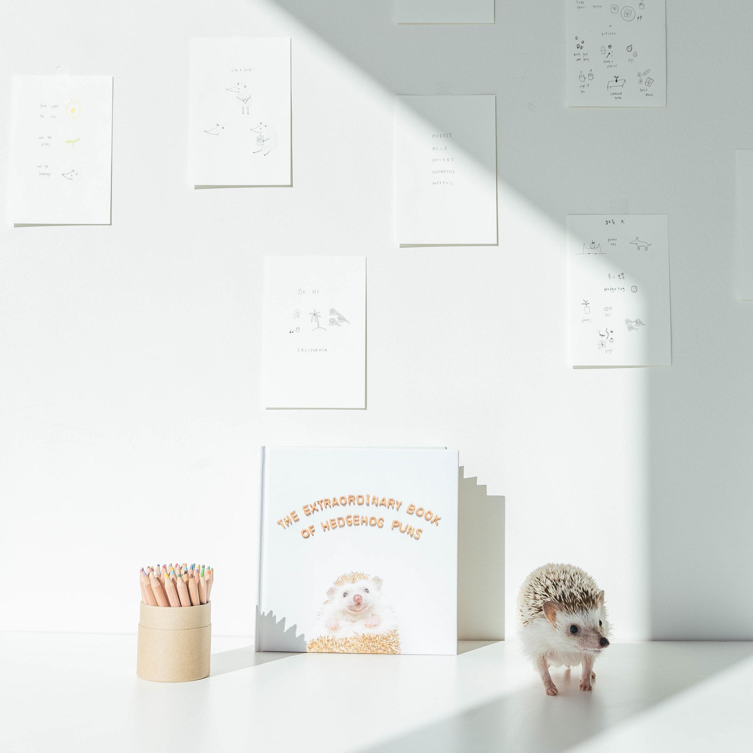 amelia-hedgehog-muji-canada-sophia-hsin-5.jpg