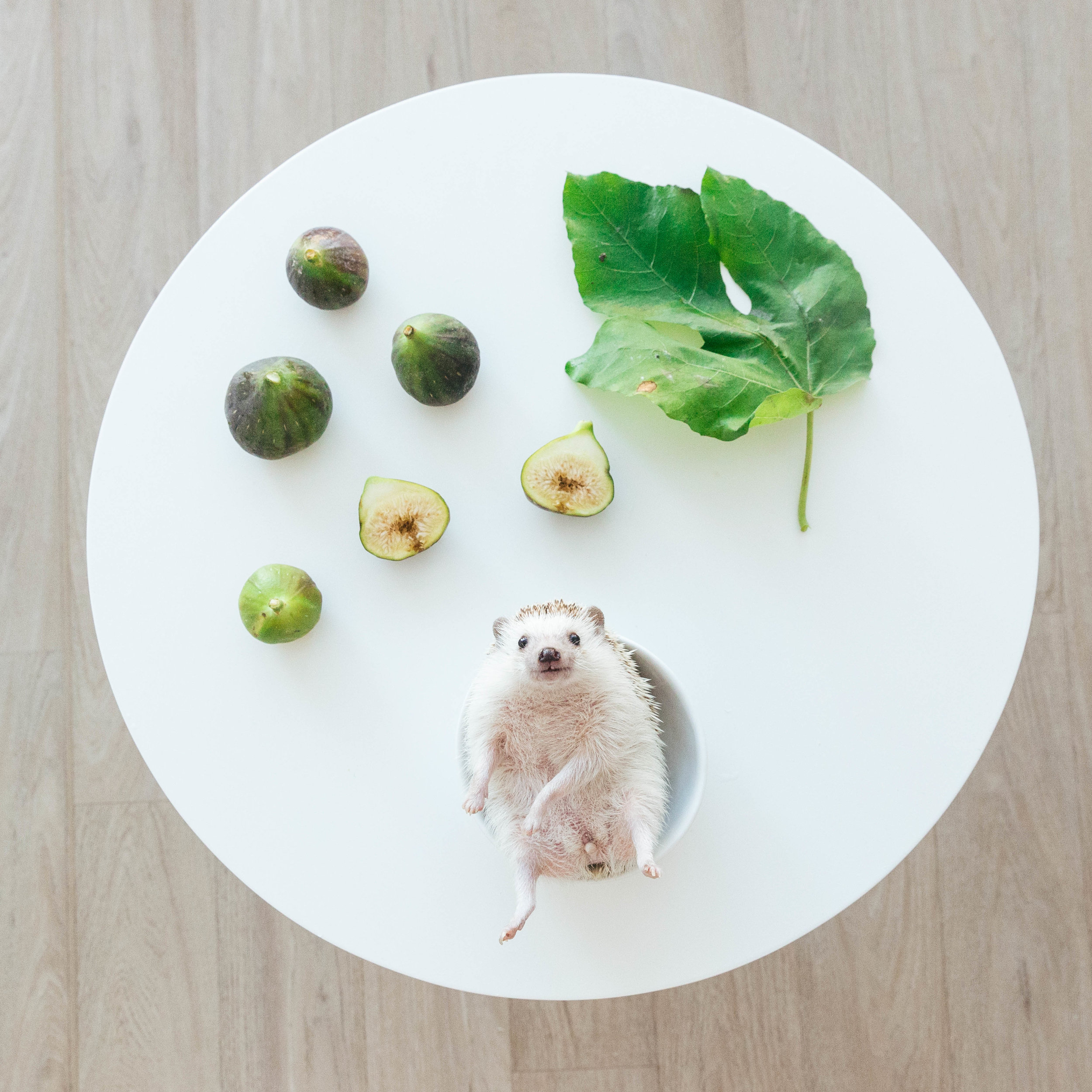 amelia-hedgehog-sophia-hsin-4.jpg