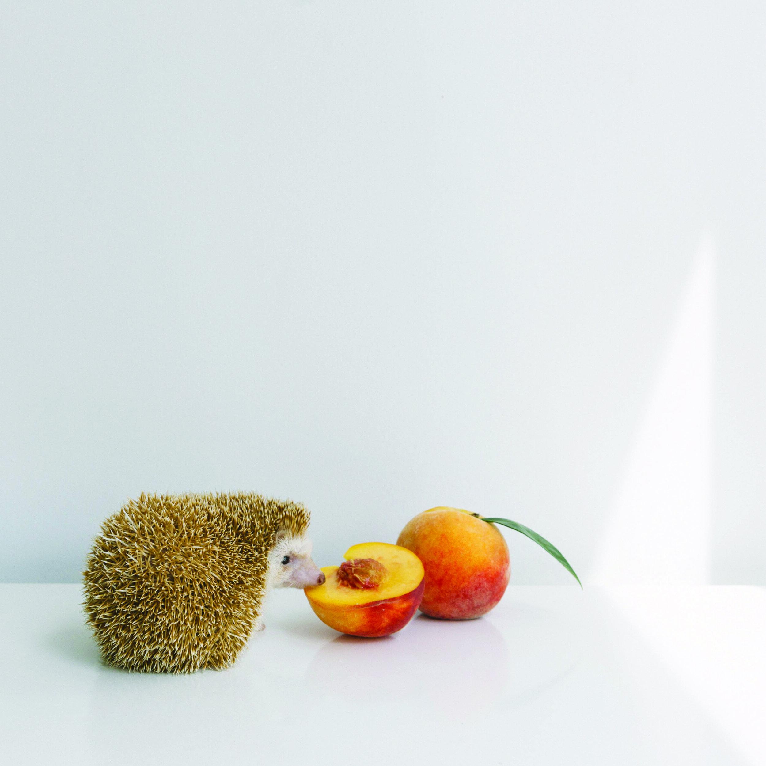 amelia_hedgehog_peach_postcard.jpg