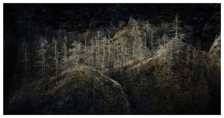 Skippers-Trees-JR.jpg