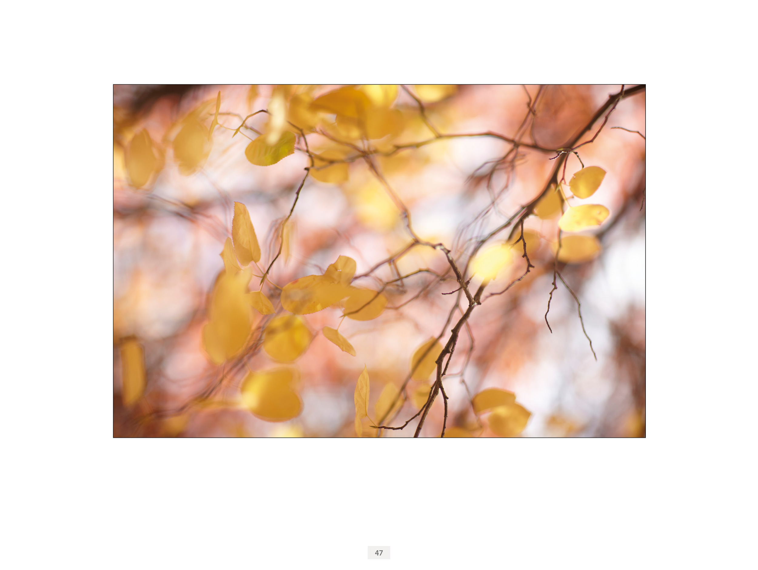 LG1 ebook for Flatbooks page 47 Autumn Leaf.jpg