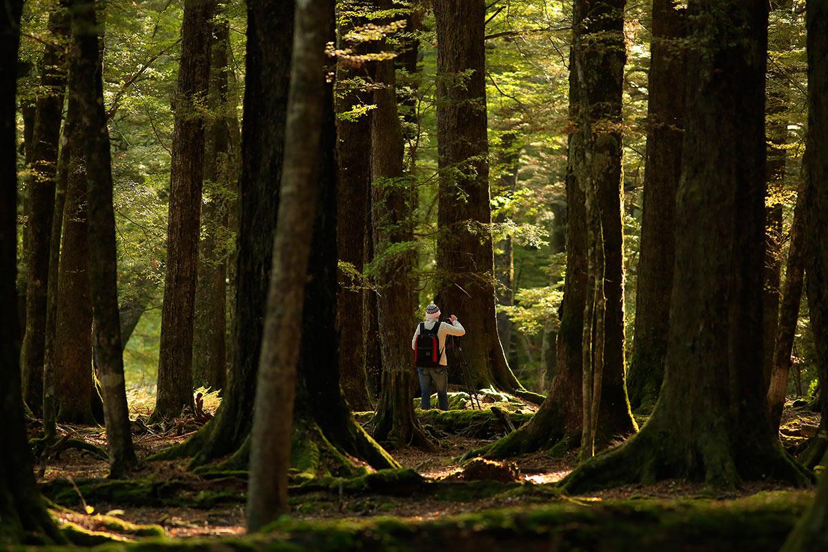Photo-Safari-Paradise-Forrest.jpg