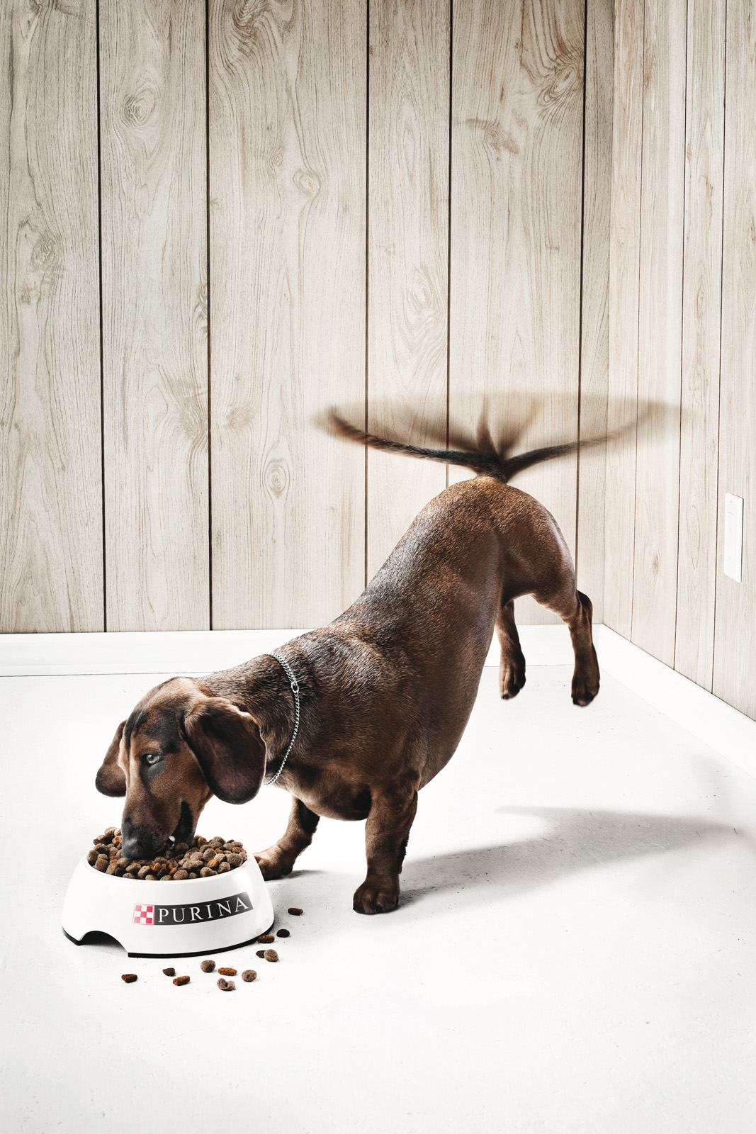 THE DOG  Client: Purina Agence: Publicis Création: Nicolas Massey, Carl Robichaud Direction artistique: Julien Thiry Photo: Alain Desjean Retouche photo: Claude Lafrance