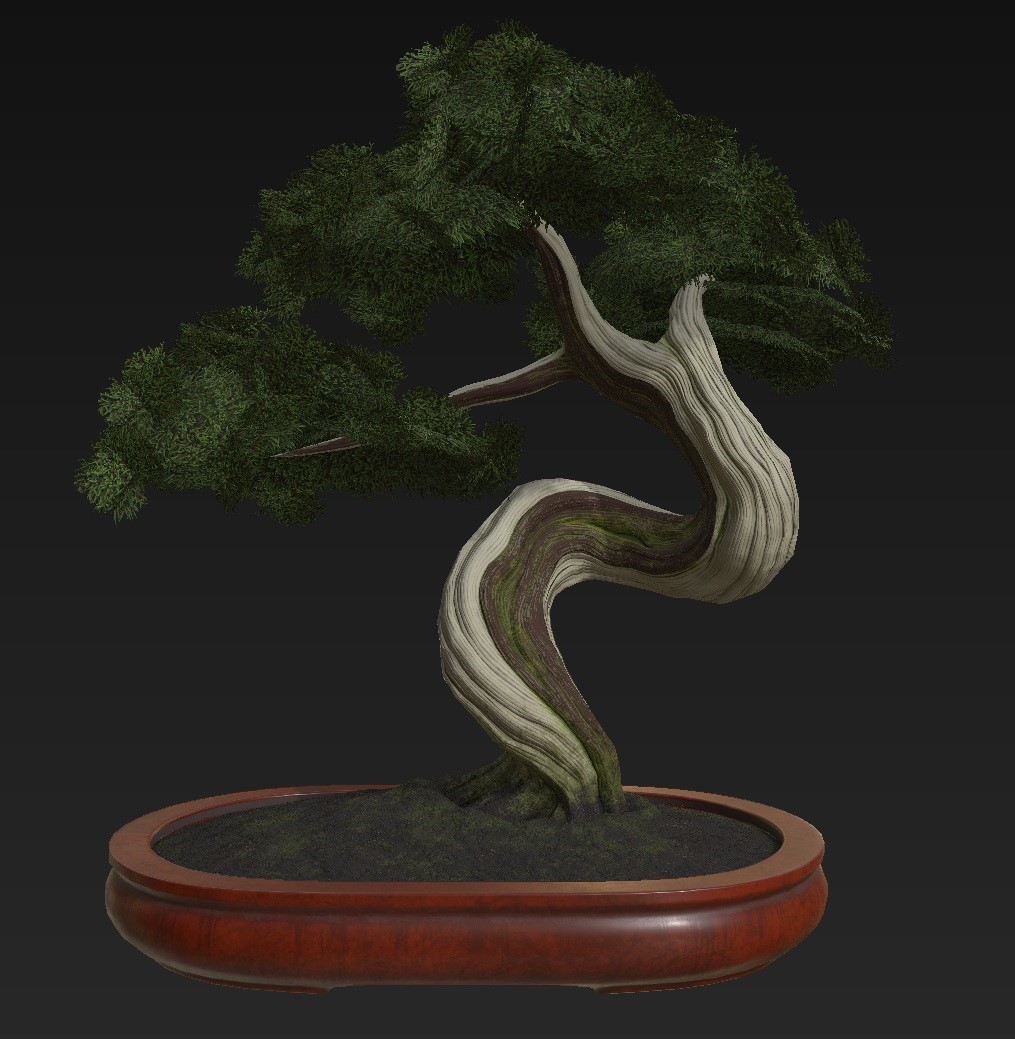 Bonsai_Tree_04.jpg