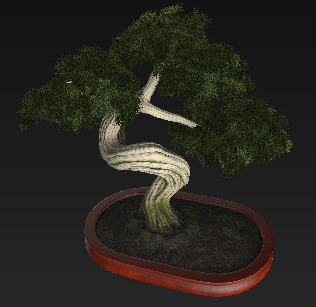 Bonsai_Tree_17.jpg