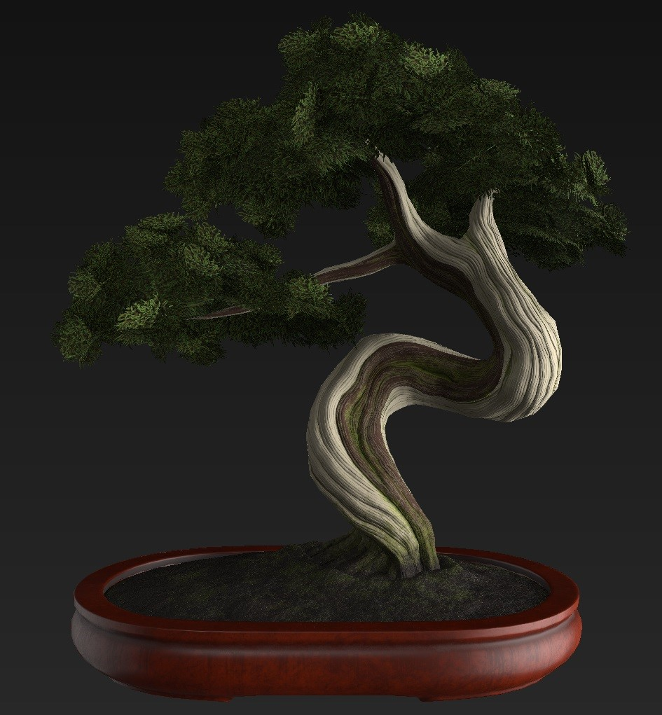 Bonsai_Tree_26.jpg