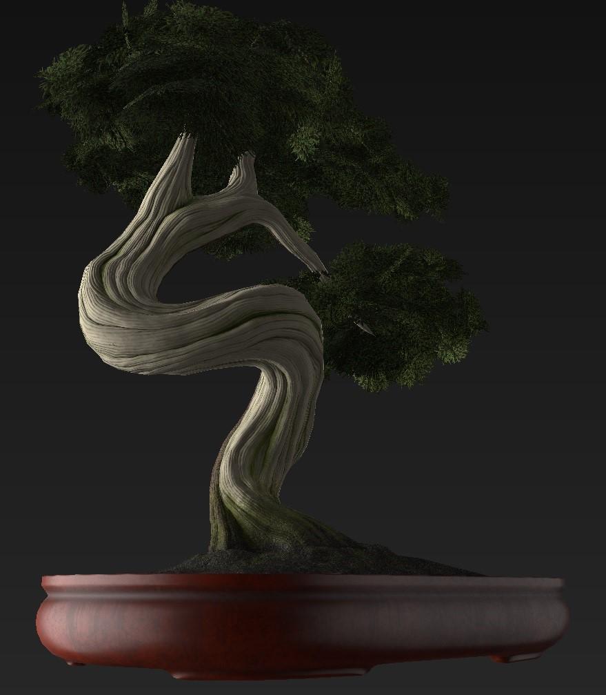 Bonsai_Tree_38.jpg