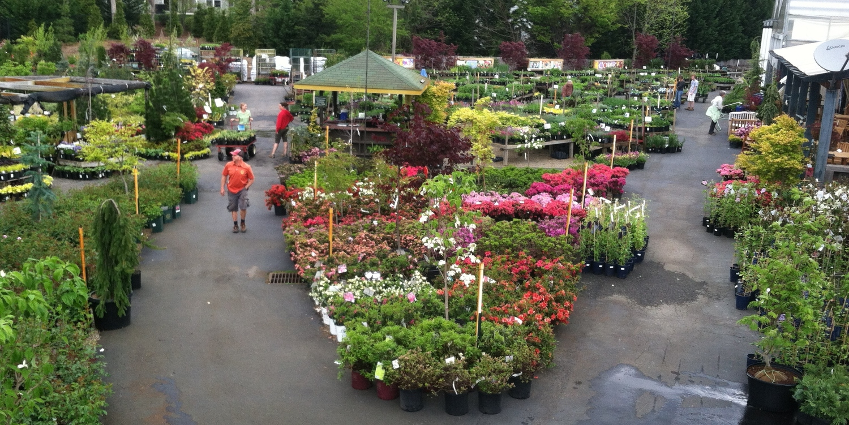 Plant Availability Orders B B Barns Garden Center