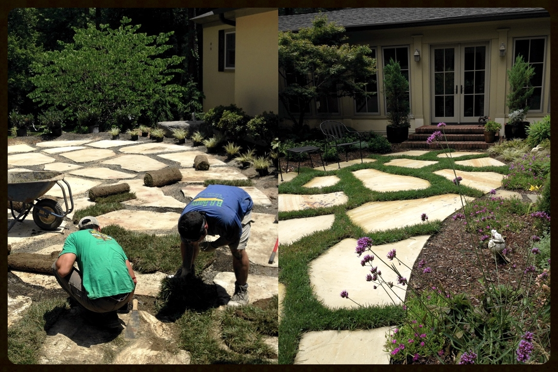 Landscape crews installing sod between stepping stones and the final result