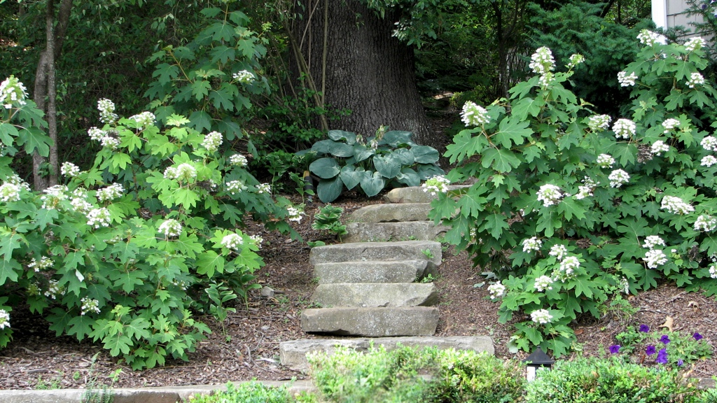 Stone steps 08.jpg
