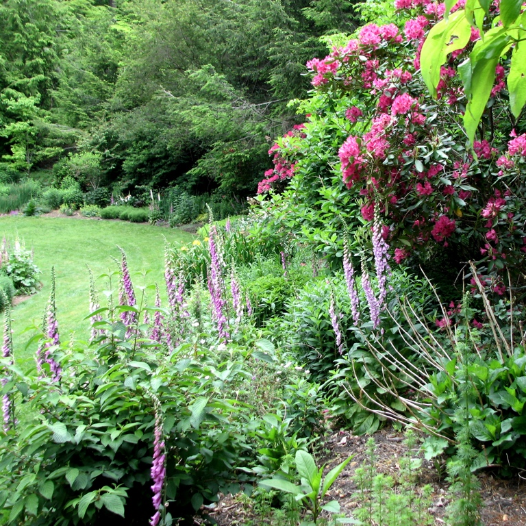 Border of Shrubs & Perennials