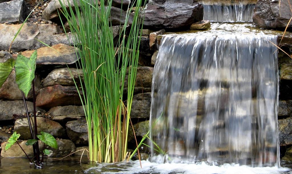 Aquatic plants and waterfalls