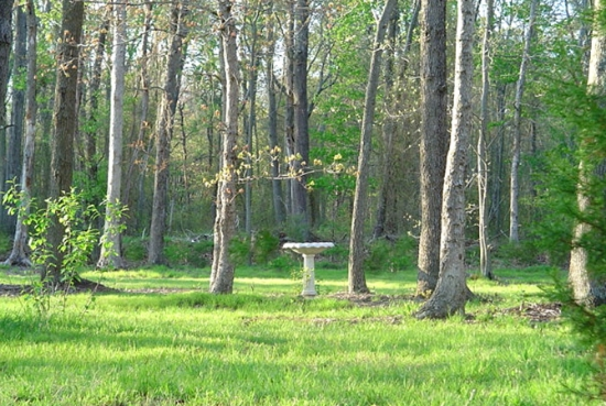 Birdbath that draws the eye to the beautiful, vertical height of the trees.