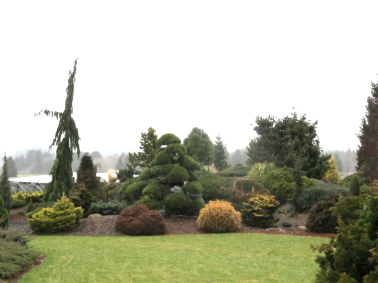 Unlike other gardens, that use masses or multiplies of plants, conifer gardens use one of each plant.
